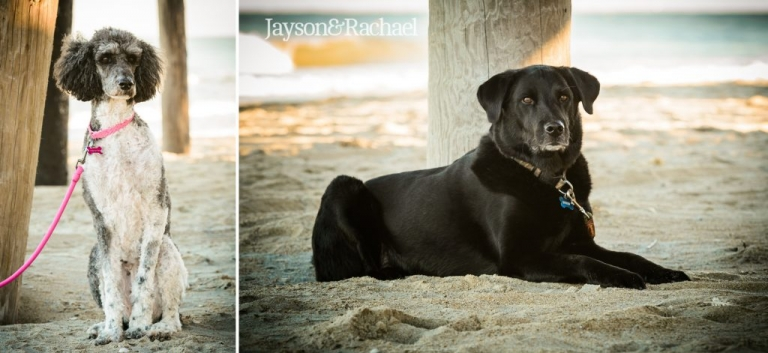 Outer Banks Family Pictures Family Dogs